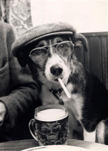 mi perro fumador